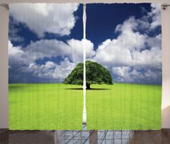 Yaşlı Ağaç Fon Perde Yeşil Yaşlı Ağaç
