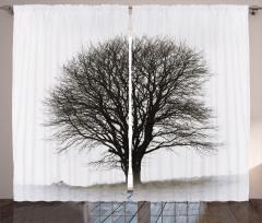 Nostaljik Ağaç Fon Perde Sonbahar Nostaljik Ağaç