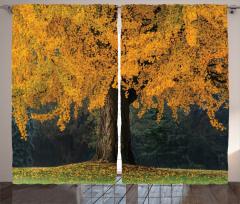 Sararmış Yapraklı Ağaç Fon Perde Sararmış Yapraklı Ağaç