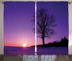 Deniz Kenarındaki Ağaç Fon Perde Yalnız Ağaç Doğa Mor
