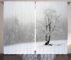 Karlı Ağaç Fon Perde Ormanda Karlı Hava Beyaz