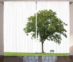 Parktaki Ağaç Fon Perde Ağaç Yeşil Beyaz