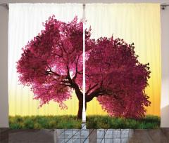 Japon Sakura Ağacı Manzaralı Fon Perde Günbatımı