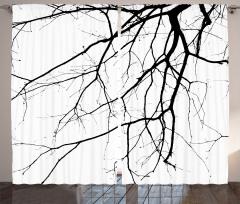 Sonbaharda Ağaç Dalları Fon Perde Sonbaharda Ağaç Dalları