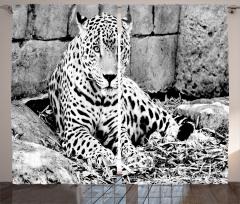 Nostaljik Jaguar Fon Perde Siyah Beyaz Jaguar