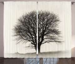Yalnız Bir Ağaç Fon Perde Doğada Sonbahar Gri