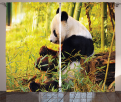 Bambu Yiyen Panda Fon Perde Orman Asya Yeşil Doğa