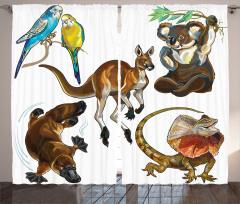 Avustralya Hayvanları Fon Perde Koala Kanguru