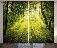 Ormanda Gün Doğumu Fon Perde Güneş Doğa