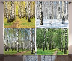 Dört Mevsim Temalı Fon Perde Ağaç Yeşil Doğa