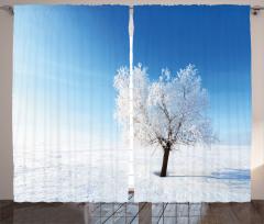 Karlı Yalnız Ağaç Fon Perde Yalnız Ağaç Manzaralı Kış Mavi