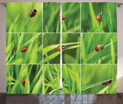 Uğur Böceği Desenli Şık Fon Perde Yeşil Turuncu Doğa