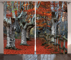 Turuncu Yapraklı Ağaç Fon Perde Turuncu Yaprak Doğa