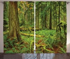 Ormanın Huzuru Fon Perde Yeşil Doğa