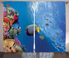Tropikal Balıklar Fon Perde Tropikal Balıklar
