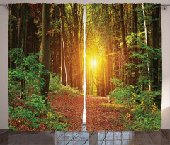 Sonbahar Güneşi Fon Perde Sonbahar Yeşil