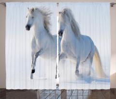 Karda Koşan Beyaz Atlar Fon Perde Karlarda Koşan Yabani Atlar Doğa