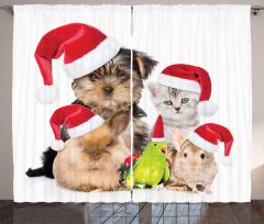 Noel Hayvanları Fon Perde Kedi Köpek Kuş Tavşan
