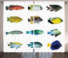 Balık Desenli Fon Perde Rengarenk Şık Tasarım