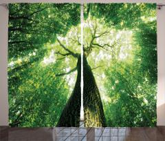 Gün Işığı ve Orman Fon Perde Sarı Yeşil