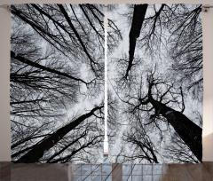 Siyah Beyaz Ağaçlar Fon Perde Şık Tasarım
