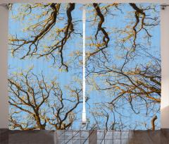 Dekoratif Ağaçlar Fon Perde Sarı Mavi