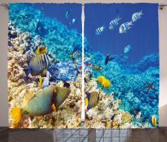 Mercan ve Balıklar Fon Perde Balıklar Mavi