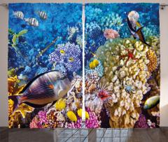 Rengarenk Mercanlar Fon Perde Balıklar Mavi