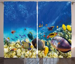 Deniz ve Balıklar Fon Perde Balıklar Mavi