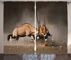Antilop Temalı Fon Perde Kahverengi Vahşi Doğa