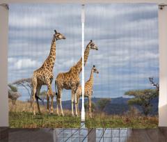 Zürafa Temalı Fon Perde Afrika Vahşi Yaşam Mavi