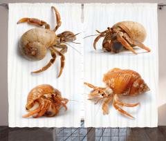 Deniz Böcekleri Fon Perde Kahverengi Beyaz Fonlu