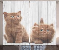 Sevimli Yavru Kediler Desenli Fon Perde Ahşap