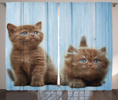 Kahverengi Yavru Kediler Fon Perde Mavi Ahşap