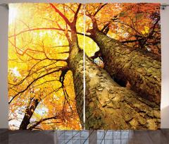 Sonbahar Temalı Fon Perde Sarı Kahverengi Ağaç