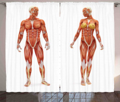 Kas Sistemi Desenli Fon Perde Sağlık Anatomi