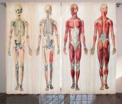 İnsan Anatomisi Desenli Fon Perde İskeletler
