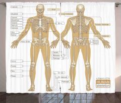 İnsan İskeleti Desenli Fon Perde Kemikler