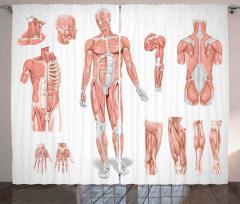 Vücudun Bölümleri Fon Perde Kas Yapısı