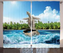 Kabuğunda Sörf Yapan Kaplumbağa Fon Perde Komik