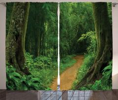 Yemyeşil Orman Yolu Fon Perde Doğa