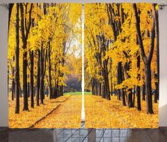 Yaprak Döken Ağaçlar Fon Perde Sarı