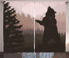 Ormandaki Vahşi Ayı Fon Perde Kahverengi