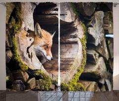 Ormanda Tilki Portresi Fon Perde Yaban Hayatı