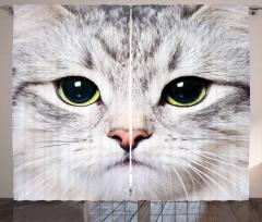 Sevimli Kedi Desenli Fon Perde Gri Şık Tasarım