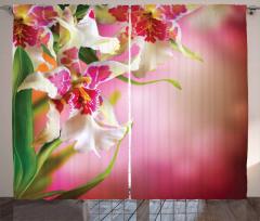 Çiçek Desenli Fon Perde Pembe Şık Tasarım Trend