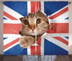 Bayrak ve Kedi Temalı Fon Perde Kahverengi Kırmızı
