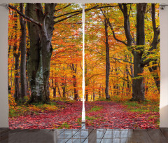 Ormanda Sonbahar Sabahı Fon Perde Yaprak Ağaç Doğa