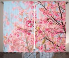 Pembe Kiraz Çiçekleri Fon Perde Dekoratif Şık