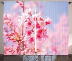 Pembe Çiçek Cümbüşü Fon Perde Kır ve Bahar